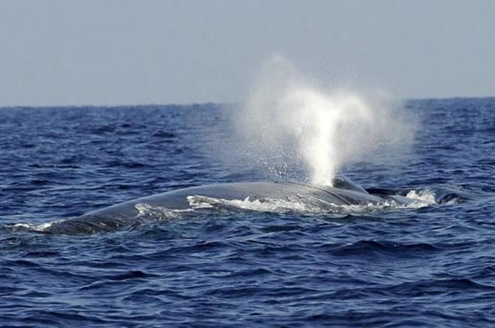 Sri_Lanka_Navy_Whale_Watching_Maritime_Tourism_4