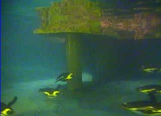 underwater_penguin_webcam